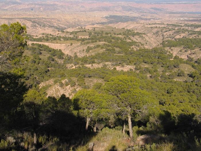 Vista parcial del área por la que discurrirá la ruta de Monte Pajarillo